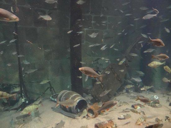Ozeaneum: Unterwasser-Einblicke