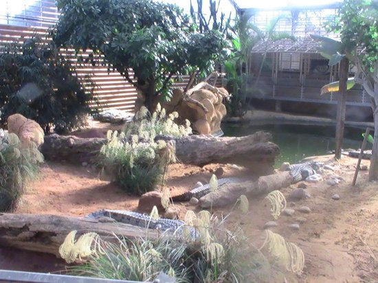La Ferme aux Crocodiles : décor sublime