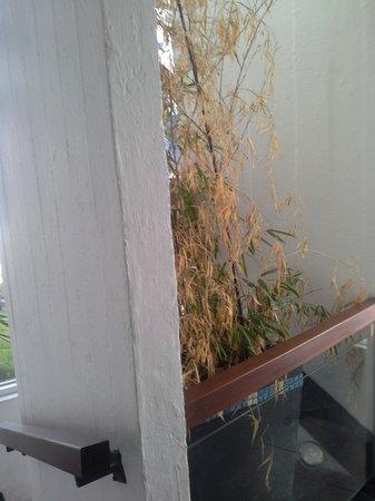 باي دي أنجيز أبارتهوتل آند سبا: Plant were litterally out of (peak) season