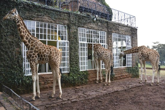 Giraffe Manor: Breakfast