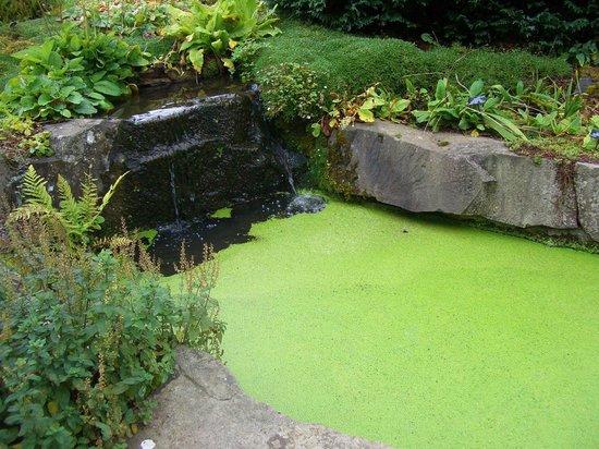 St Andrews Botanic Garden: The waterway
