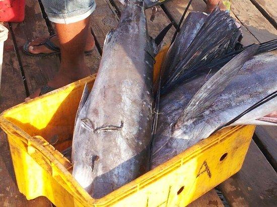 "Seafest Hotel : Malins catch by  ""Bajau Laut"""