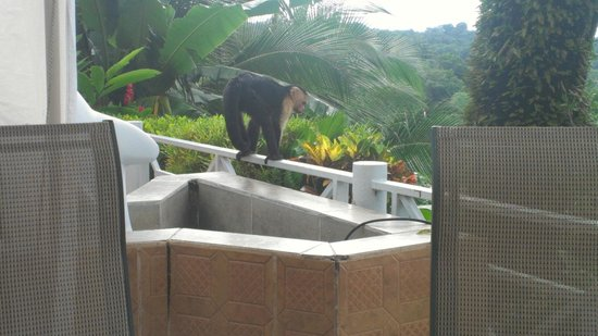 La Mansion Inn: Monkey at our breakfast