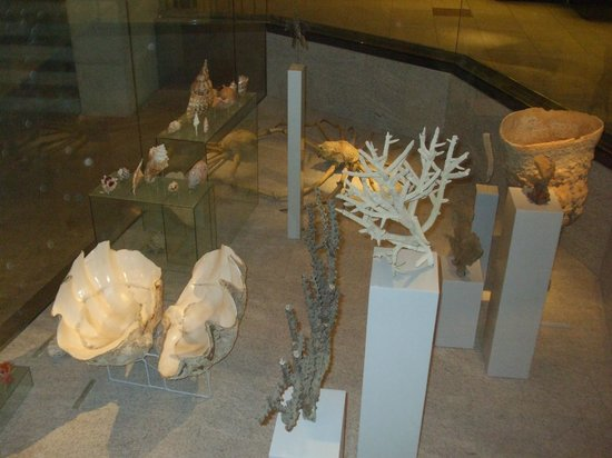 Zoological Museum: Sea shells and fossils
