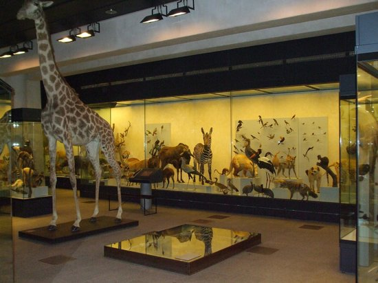 Zoological Museum: giraffe and other animals