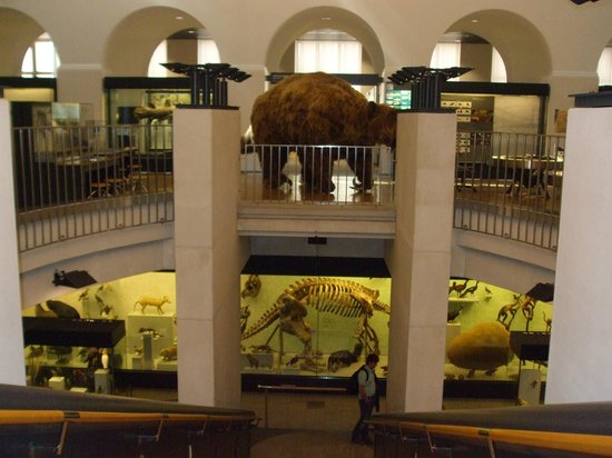 Zoological Museum: View of the main level