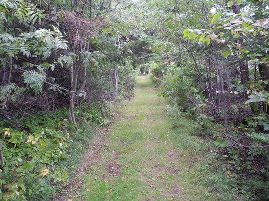 Clark's Sunny Isle Motel : Trail to the seashore