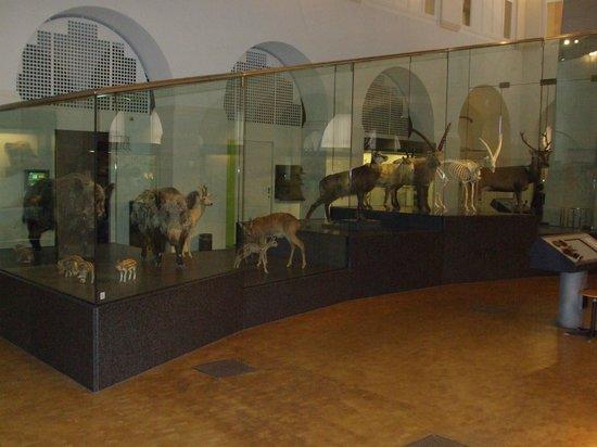 Zoological Museum: Main level animals