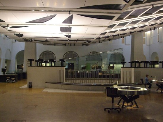 Zoological Museum : Lobby view