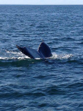 The Quarterdeck Inn by the Sea: Whale watching off Cape Ann