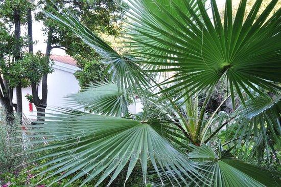 Hunguest Hotel Sun Resort : Еще одно растение .