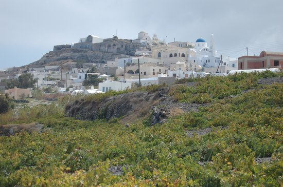 Esperas: Santorini vineyards-wine tour