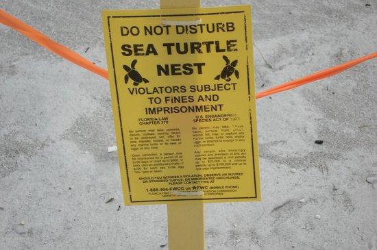 Sandcastle Resort at Lido Beach: Schildpadnesten op het strand