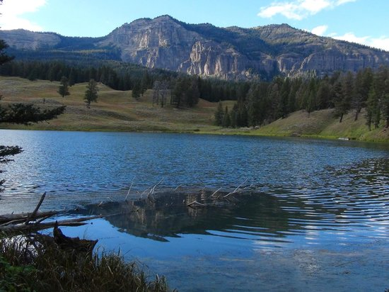 Wildlife Expeditions of Teton Science Schools: Trout Lake