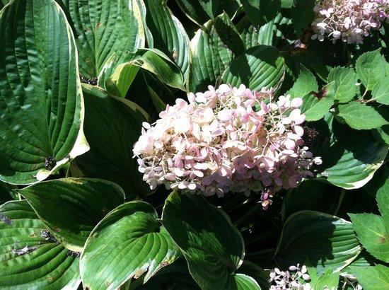 Snowvillage Inn: Beautiful flowers