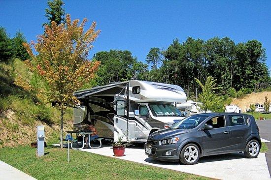 Bear Cove Village : Campsite