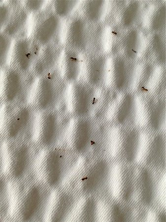 Greenbelt, MD: Ant outbreak Room 228 Aug. 25-26, 2013