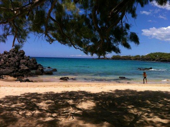 Waialea Beach: Shady trees to sit under