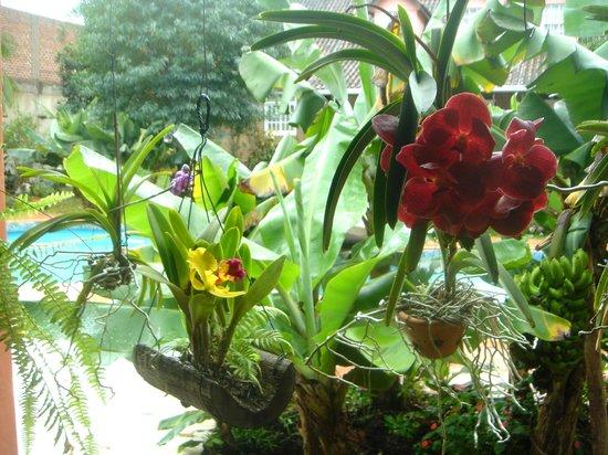 La Sorgente Hotel Posada: orquídeas en la galería junto a la piscina