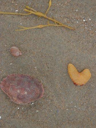 Popham Beach State Park: beach finds