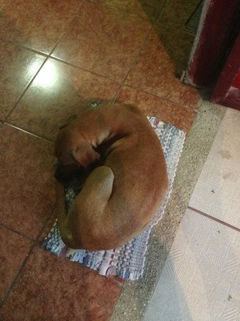 Santa Teresa Hostel: Canelo, the friendly hostel dog!