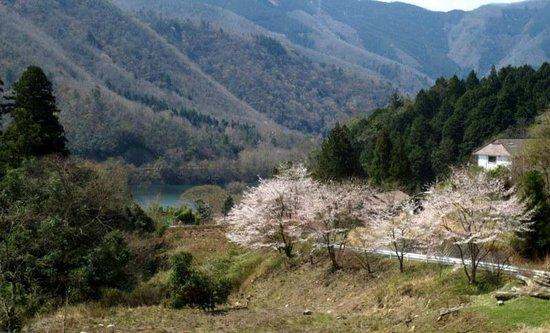 Miyama Suisenan