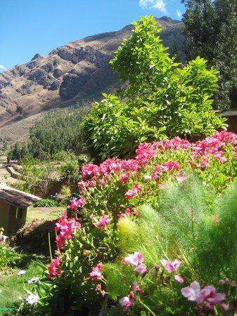 la casa del conde jardines y flores alrededor