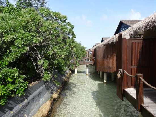 Vivanta by Taj Coral Reef Maldives: water villa