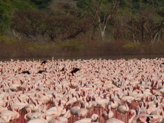 Lake Bogoria : Beautiful