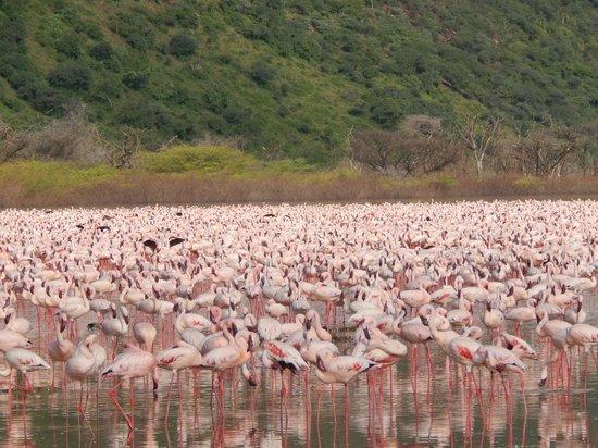 Lake Bogoria : A sea of pink