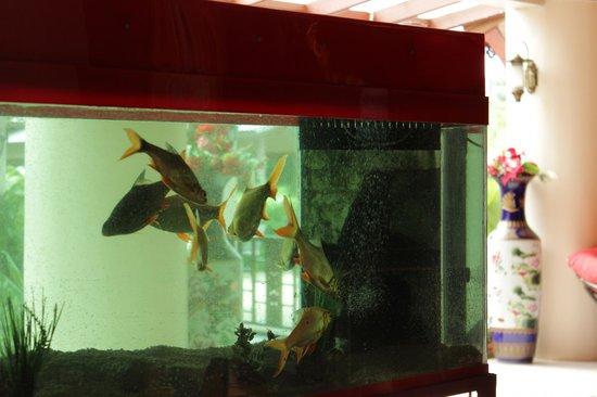 Natural Samui Hotel: lobby
