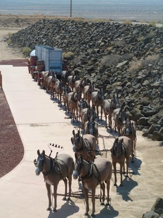 Replica Of The 20 Mule Team And Wagons Picture Of Borax Visitor Center Boron Tripadvisor
