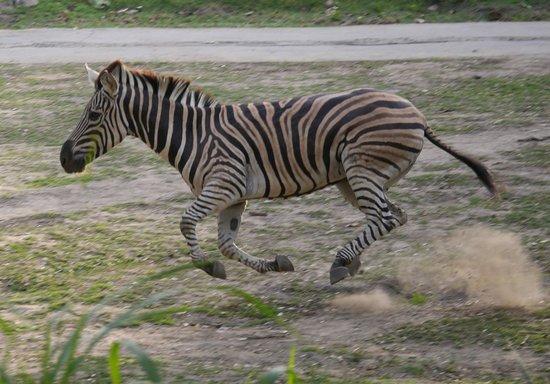 Mara River Safari Lodge: From our balcony