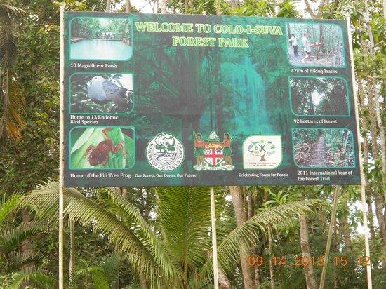 Colo I Suva Rainforest Eco Resort : Forest Reserve minutes walk away