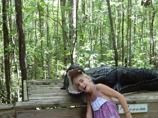"Silver Springs State Park: "" Gator Bites """