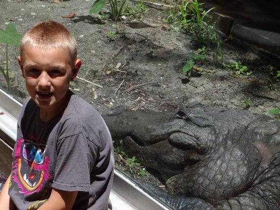 "Silver Springs State Park: "" Gators Gators EVERYWHERE """