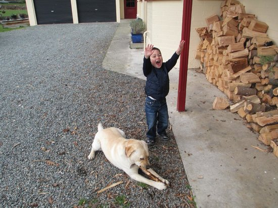 Castle Hill Lodge B&B: Our three-year-old with Barkley, the friendliest dog in the world