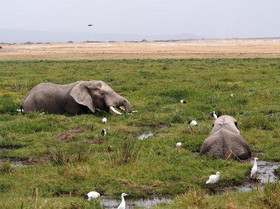 Gamewatchers Adventure Camp, Selenkay: Elephant heaven in Amboselli