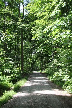 The Dolder Grand: Take a walk in the woods