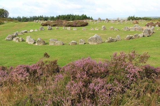 Beaghmore Stone Circles: Sehenswert, gerade im Spätsommer mit dem Lila der Erika