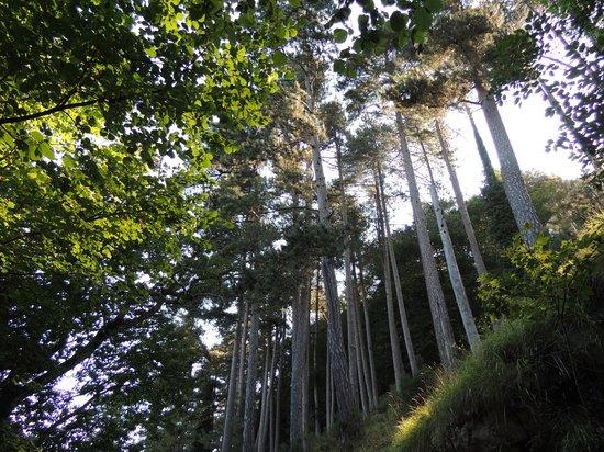 Monte Faito e Panorama: bosco e antenne