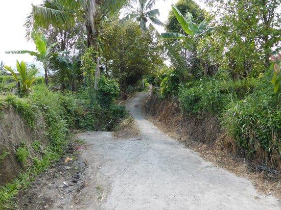 Karangsari Guest House: El camino que sube nos lleva a un paseo increible entre los campos de arroz.