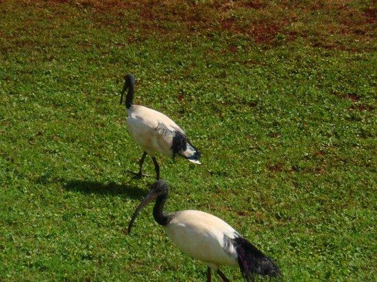 Tamambo Karen Blixen: Bahçedeki kuşlar