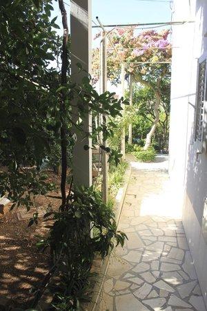 Villa Kamenica: Garden