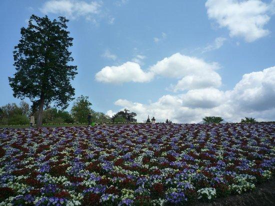Tottori Hanakairo Flower Park: hananooka