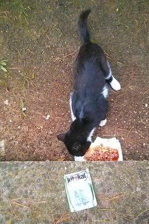 Hotel Malin: Cat lovers