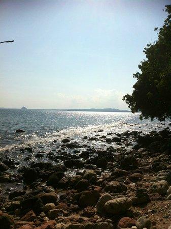 Koh Talu Island Resort: coral museum