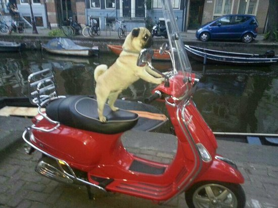 Rembrandtplein Hotel: Meet Rembrandt the hotel dog