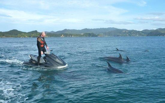 Tango Jet Ski Tours: Dolphin escort for Jet Ski - Bay of Islands, New Zealand