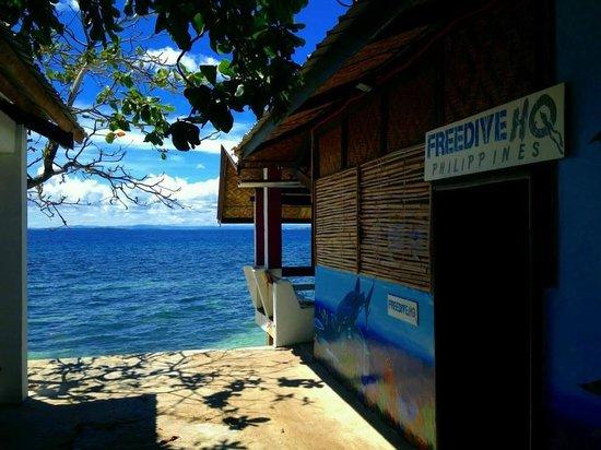 Freedive HQ: HQ4